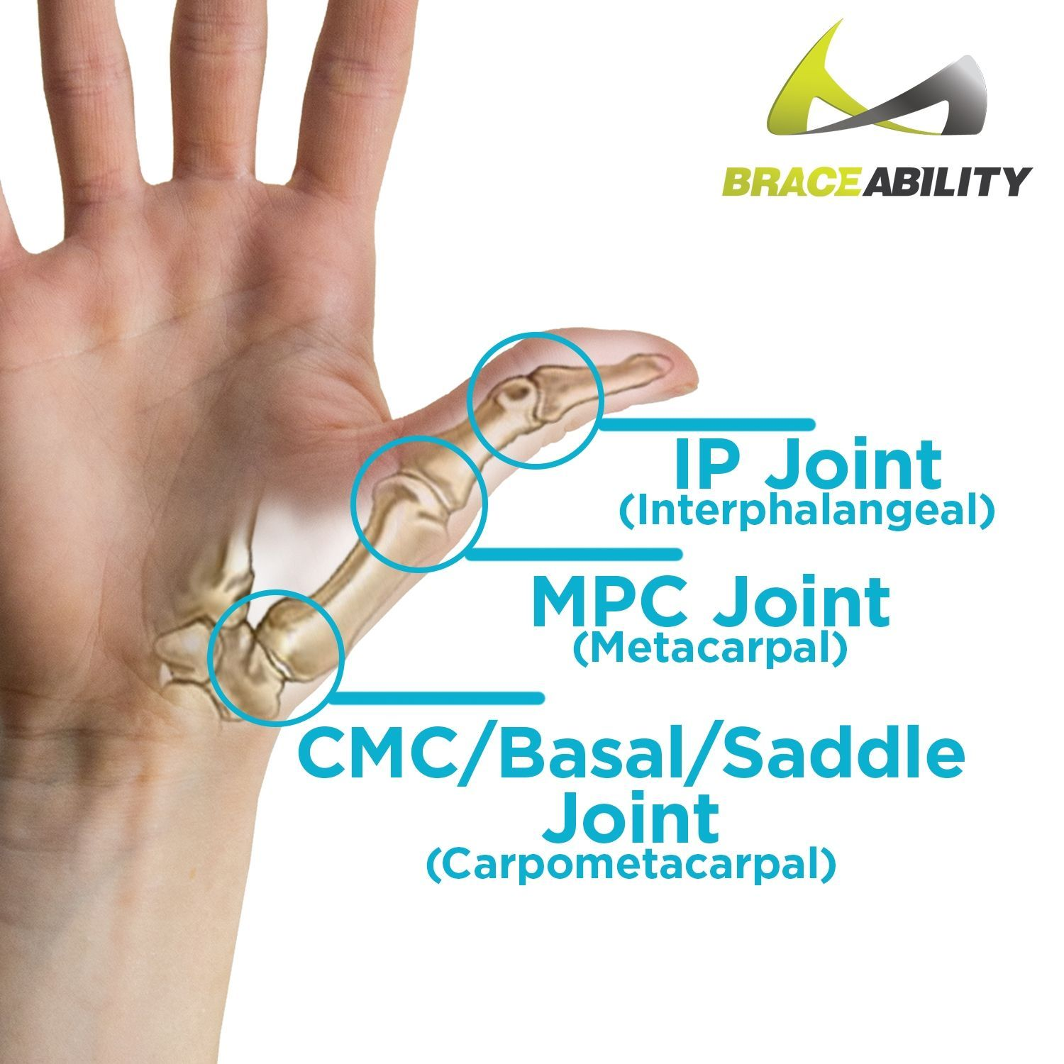 Image showing where your ip mpc and cmc basal saddle
