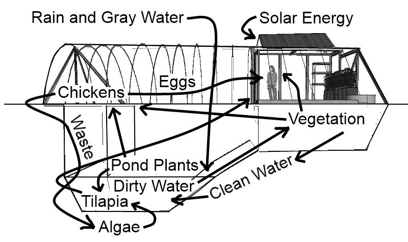 Converting A Pool To Raise Tilapia We Created Gardenpool To