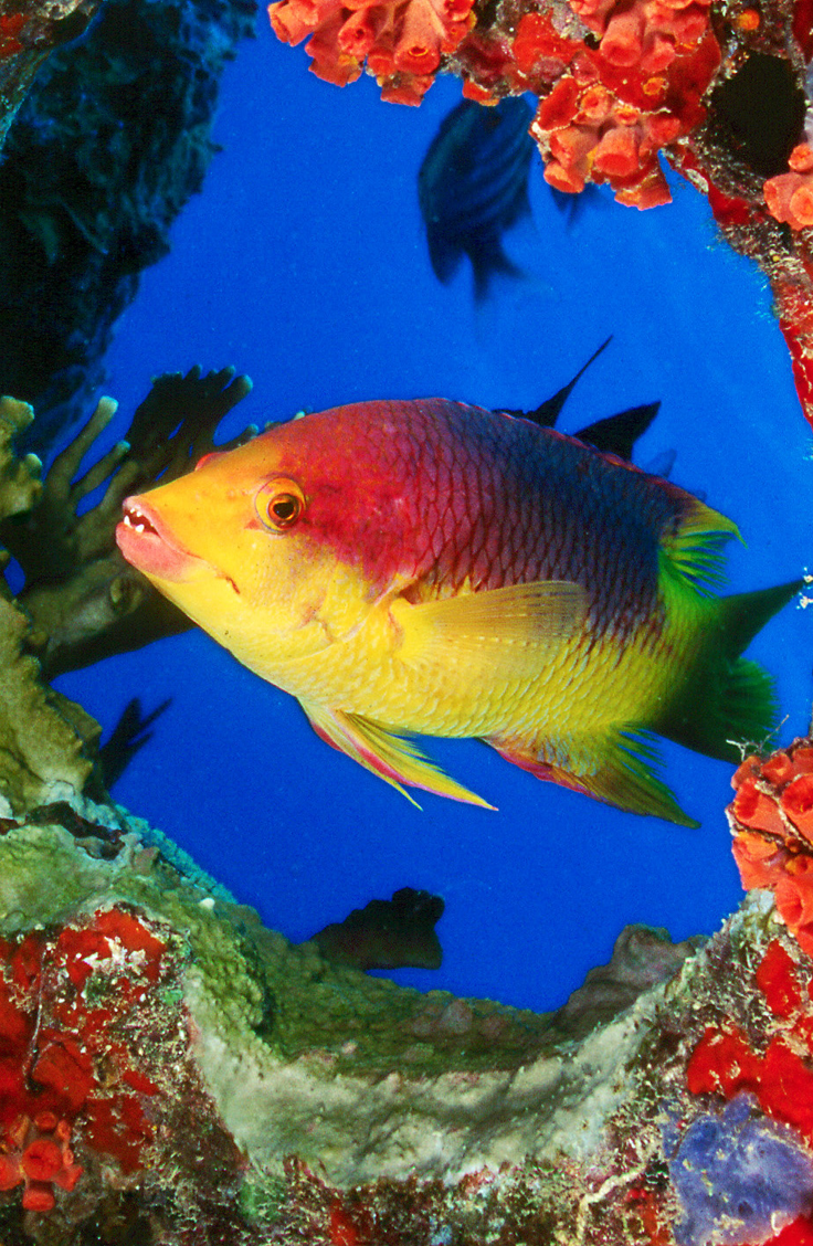 10 Best Scuba Diving Sites In The Caribbean