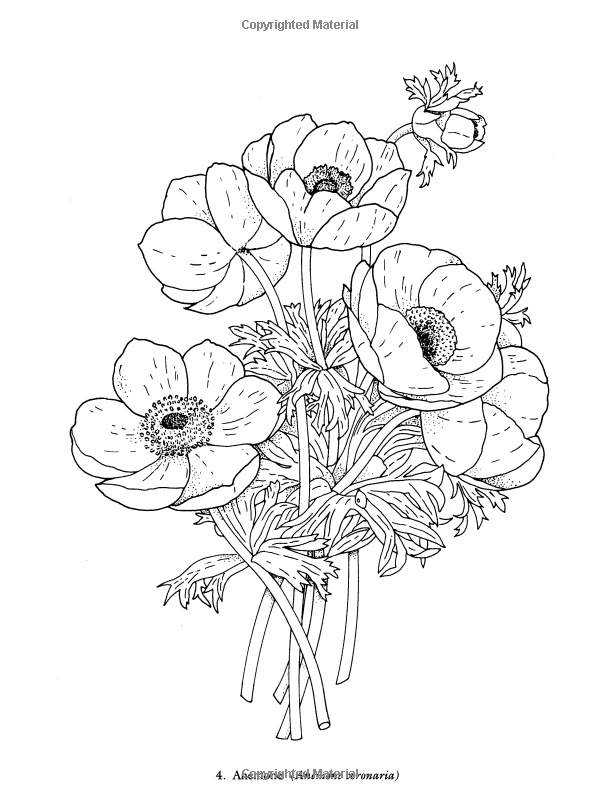 Redoute Flowers Coloring Book Dover Nature Charlene Tarbox 9780486400556 Amazon Books