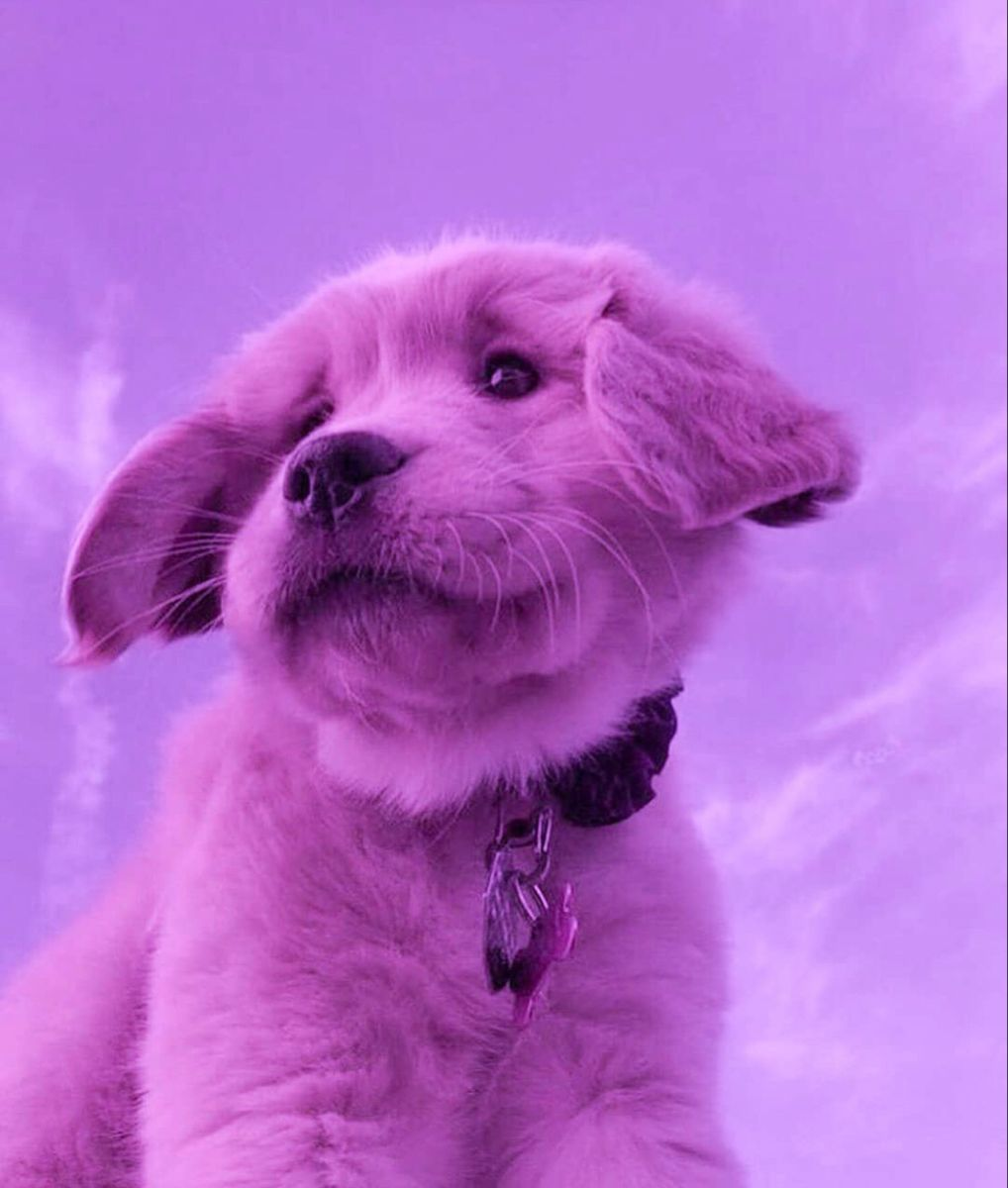 48 Cute Aesthetic Dog Profile Pictures Aestheticpic Com