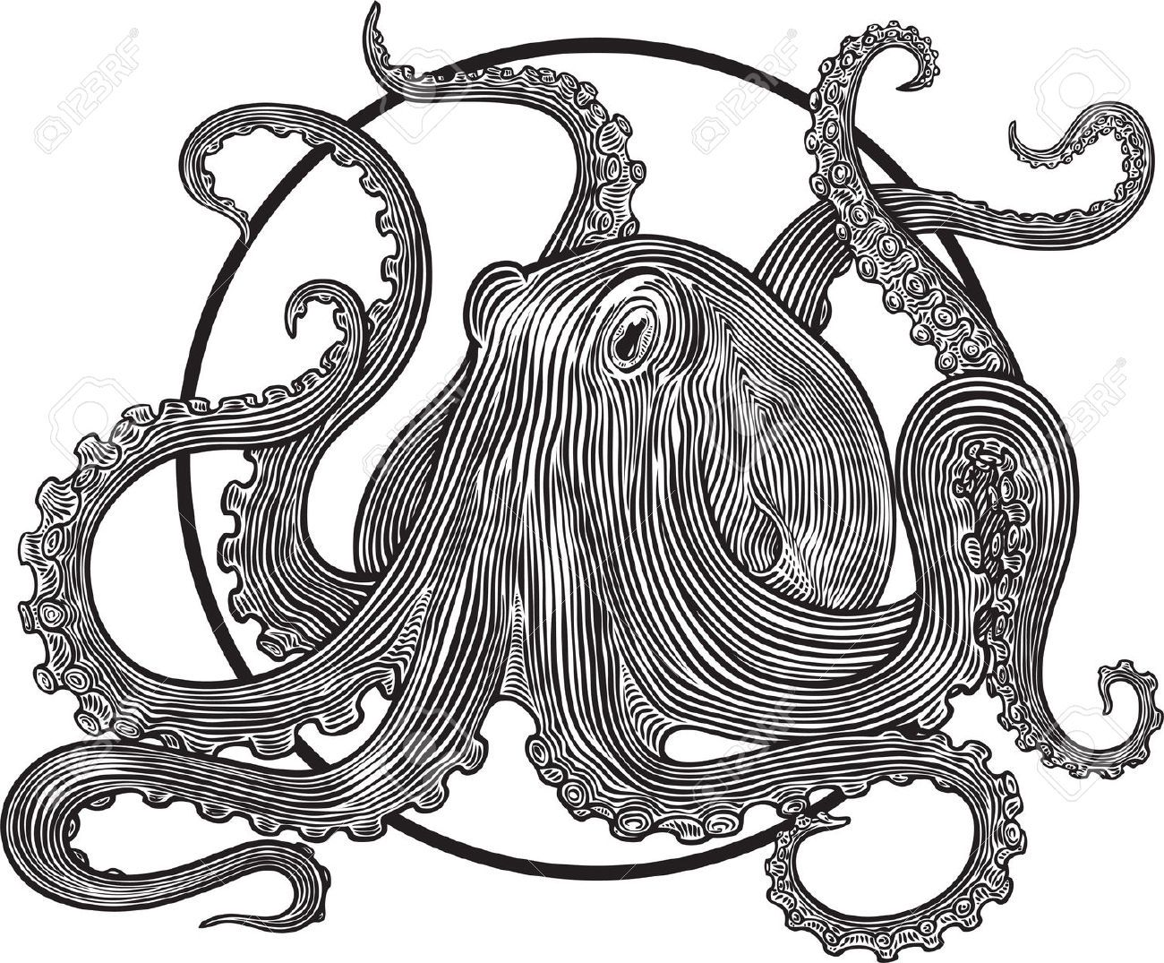 how to draw octopus tentacles