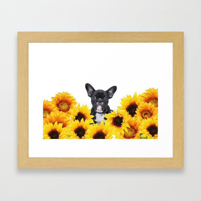 Buy French Bulldog With Sunflowers Framed Art Print By Move Art Worldwide Shipping Available At Society6 Com Just One Of Millions Of High Quality Products Ava