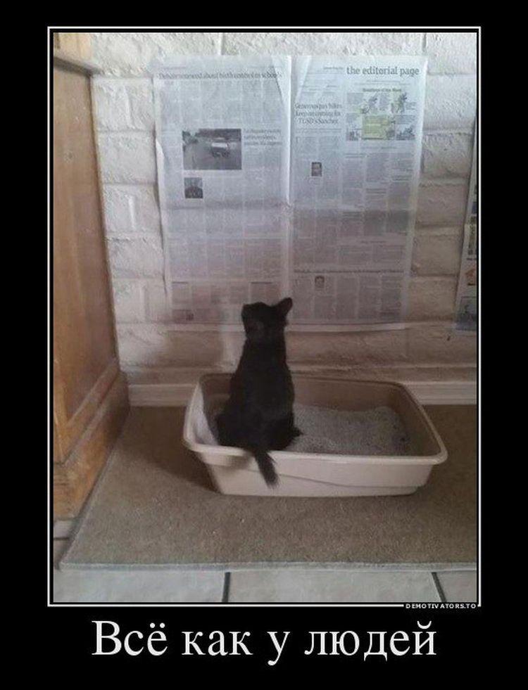 Смешные картинки с надписями про котов Смешные фото