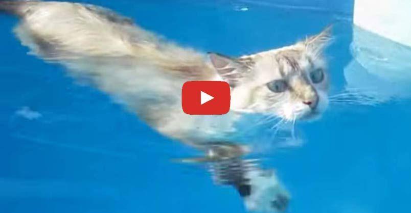 Sasha The Cat Loves to Swim in the Pool