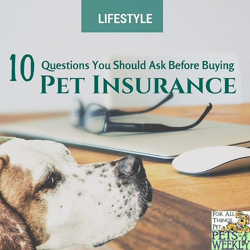 10 Questions To Ask Before Buying Pet Insurance Nationalinsuranceawarenessday Pets Buy Pets Pet Insurance