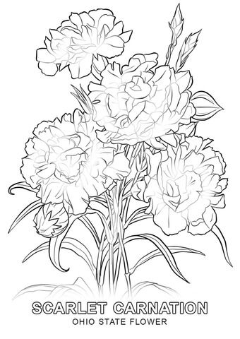 Ohio State Flower Coloring Page Flower Coloring Pages Rose