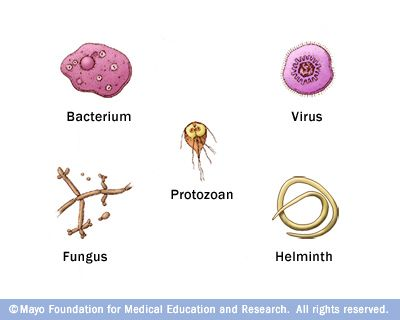 identify the differences between bacteria, viruses, fungi and parasites essay What are infectious diseases infectious diseases are caused by microorganisms such as viruses, bacteria, fungi or parasites and can spread between individuals what is an infectious disease infectious diseases are caused by microorganisms such as viruses, bacteria, fungi or parasites microorganisms that cause disease are collectively.