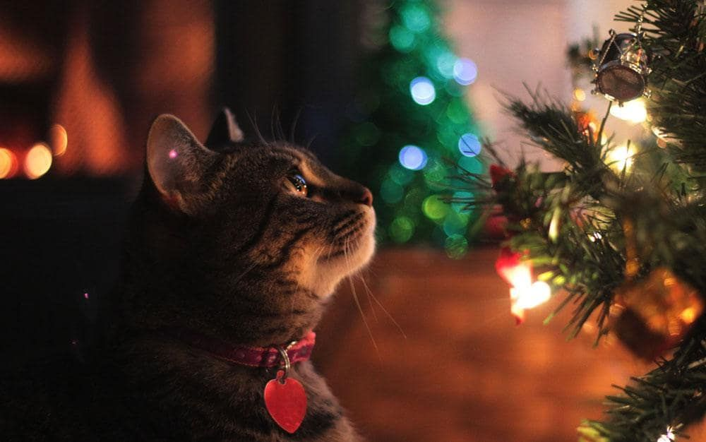 cat proof your christmas tree in seven steps keeping your moggie away - How To Keep Cat Away From Christmas Tree