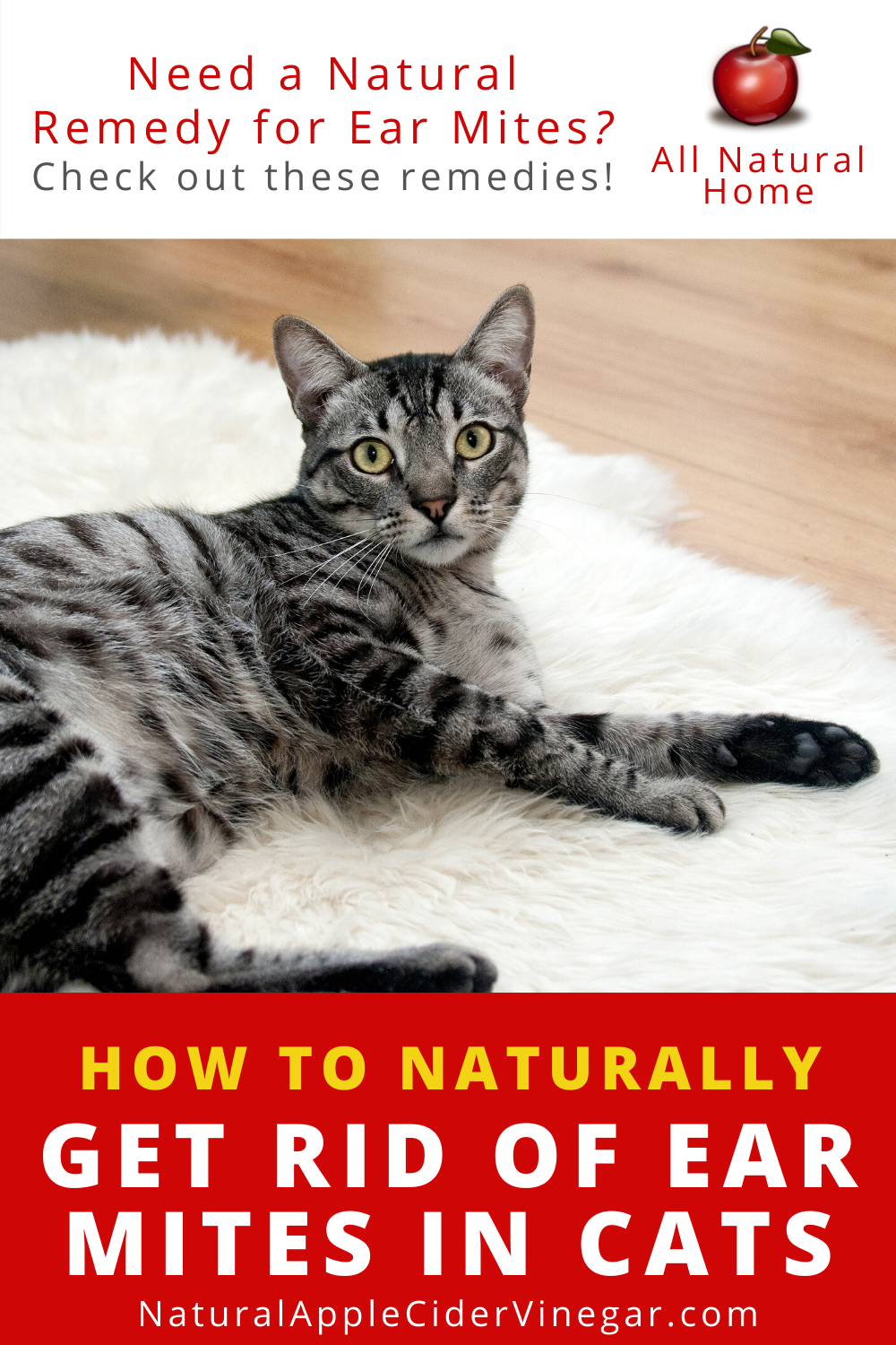 How To Get Rid Of Ear Mites In Cats Natural Home Remedy All Natural Home In 2020 Cat Ear Mites Cat Remedies Natural Cat