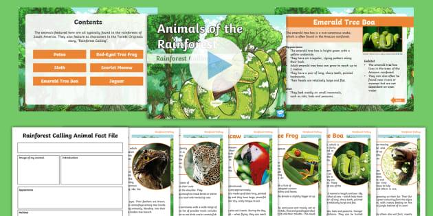 (1) Rainforest Animal Fact Files Activity Pack (teacher