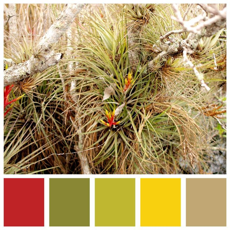 Vintage Color Palette | Inspired By a Day Trip to the Florida Everglades National Park images