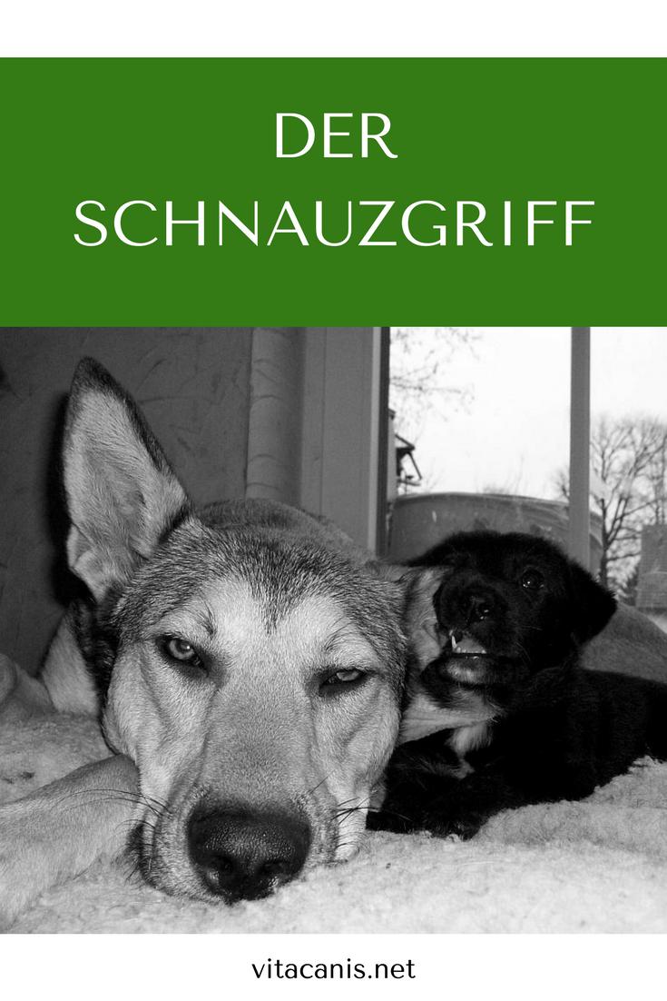 Der Schnauzgriff Hunde Erziehen Hund Diy Hunde