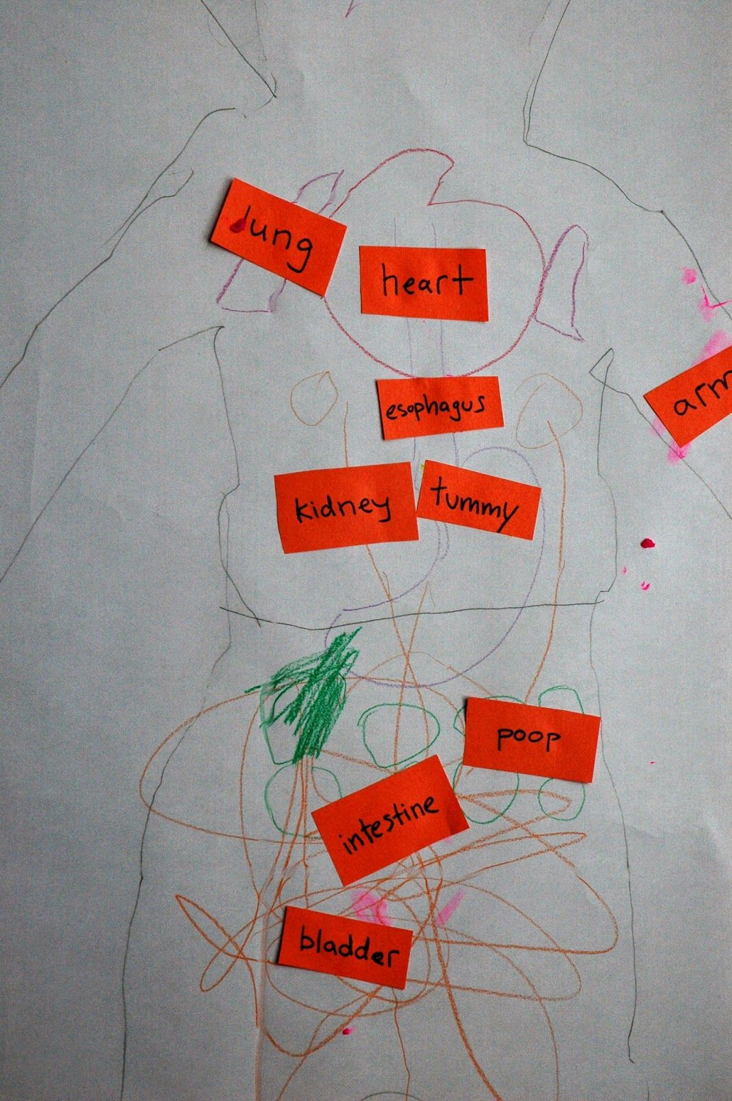 Weekly Home Preschool Theme My Body