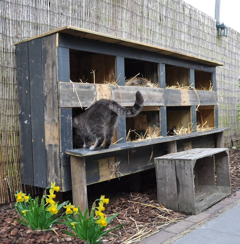 Maison Exterieur Chat Feral Cat House More Cats Pinterest Chats Le Chat Et