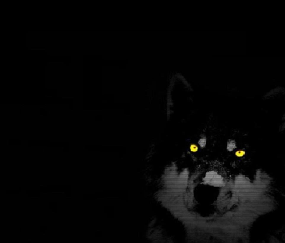 Pin By Cathy Phillips On Basic Black Wolf Pictures Wild Animal Wallpaper Animal Wallpaper