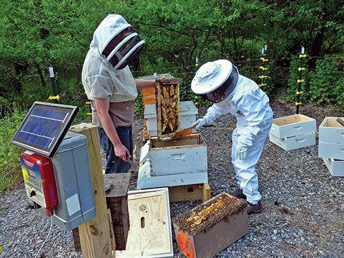 Beekeeping for Beginners #beekeeping101 #beekeepingtips ...