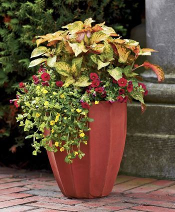 Learn how to use containers to make the most of smaller spaces, and use our recipes to make a big impact with these container garden ideas.