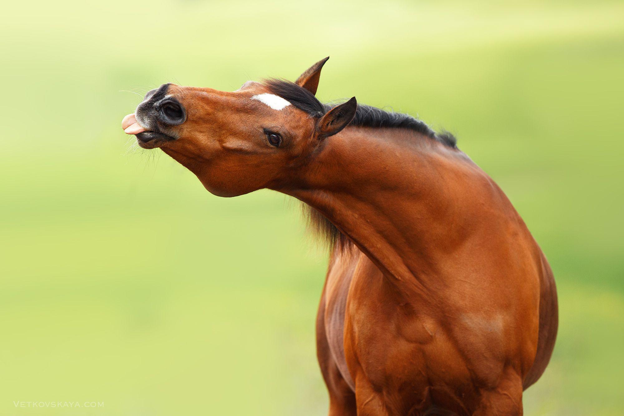 приколы картинки с лошадями дробовиков являются
