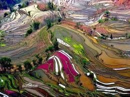 Nee dit is niet een van mijn schilderijen, het zijn de Honghe Hani rijst terrassen in China.. hoe mooi ! Wow!