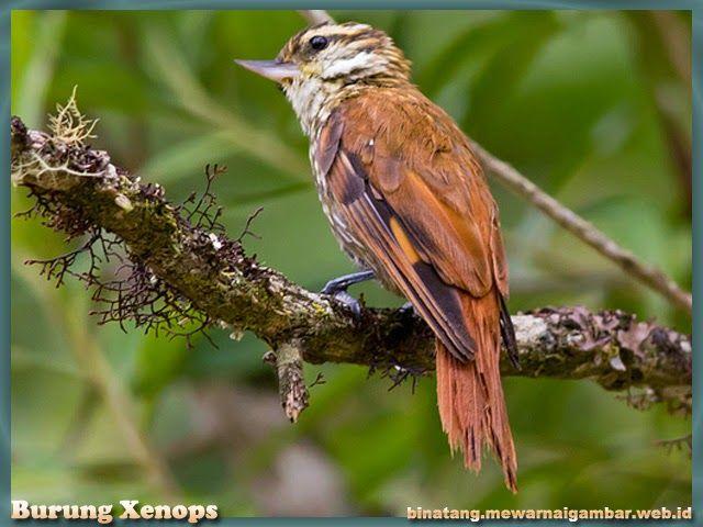 Nama Binatang Dari Huruf X Birds Animals