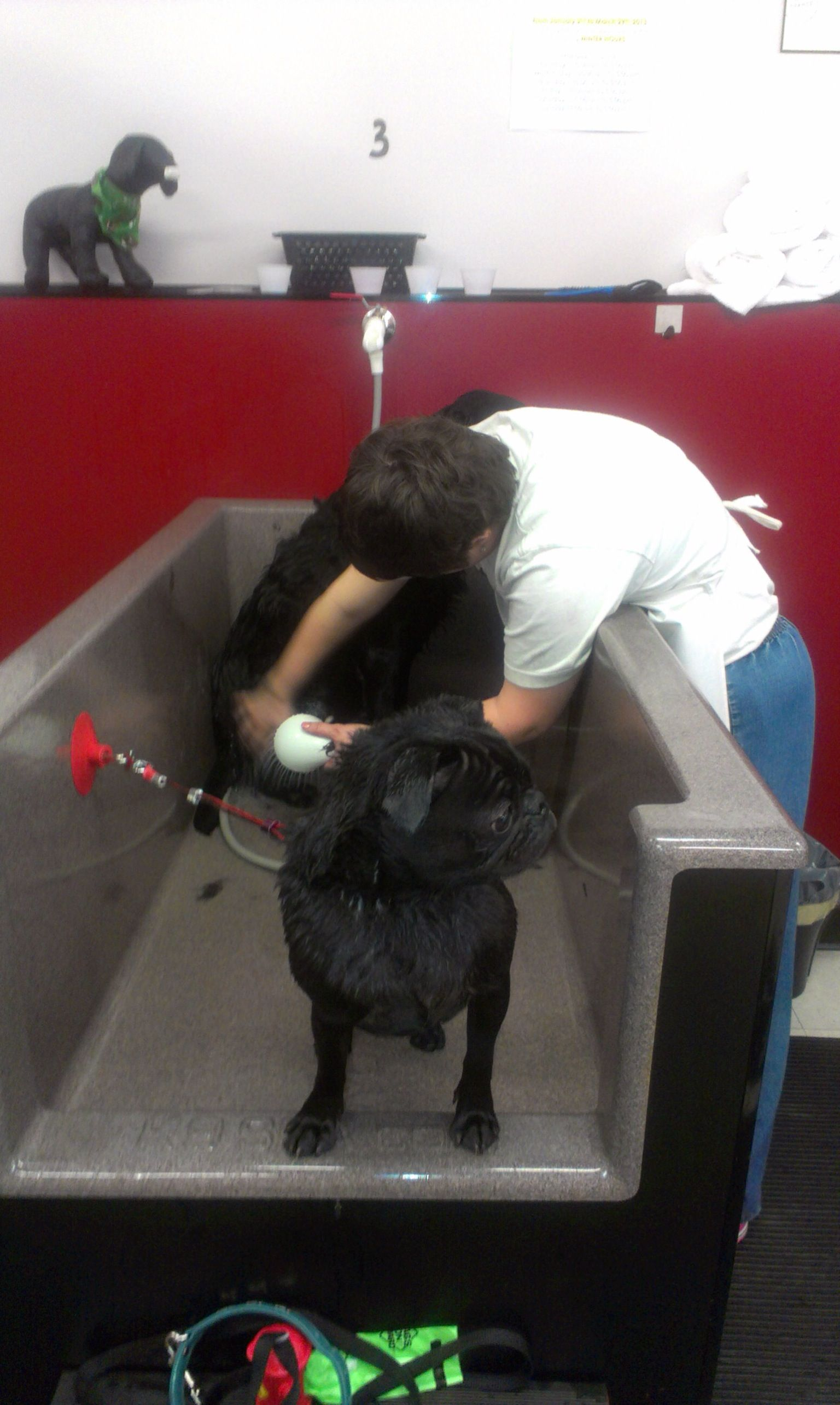 Hamish and his big sister amy at the do it yourself dog wash the hamish and his big sister amy at the do it yourself dog wash the dirty dog den hamish took 20 mins wash and dry solutioingenieria Images