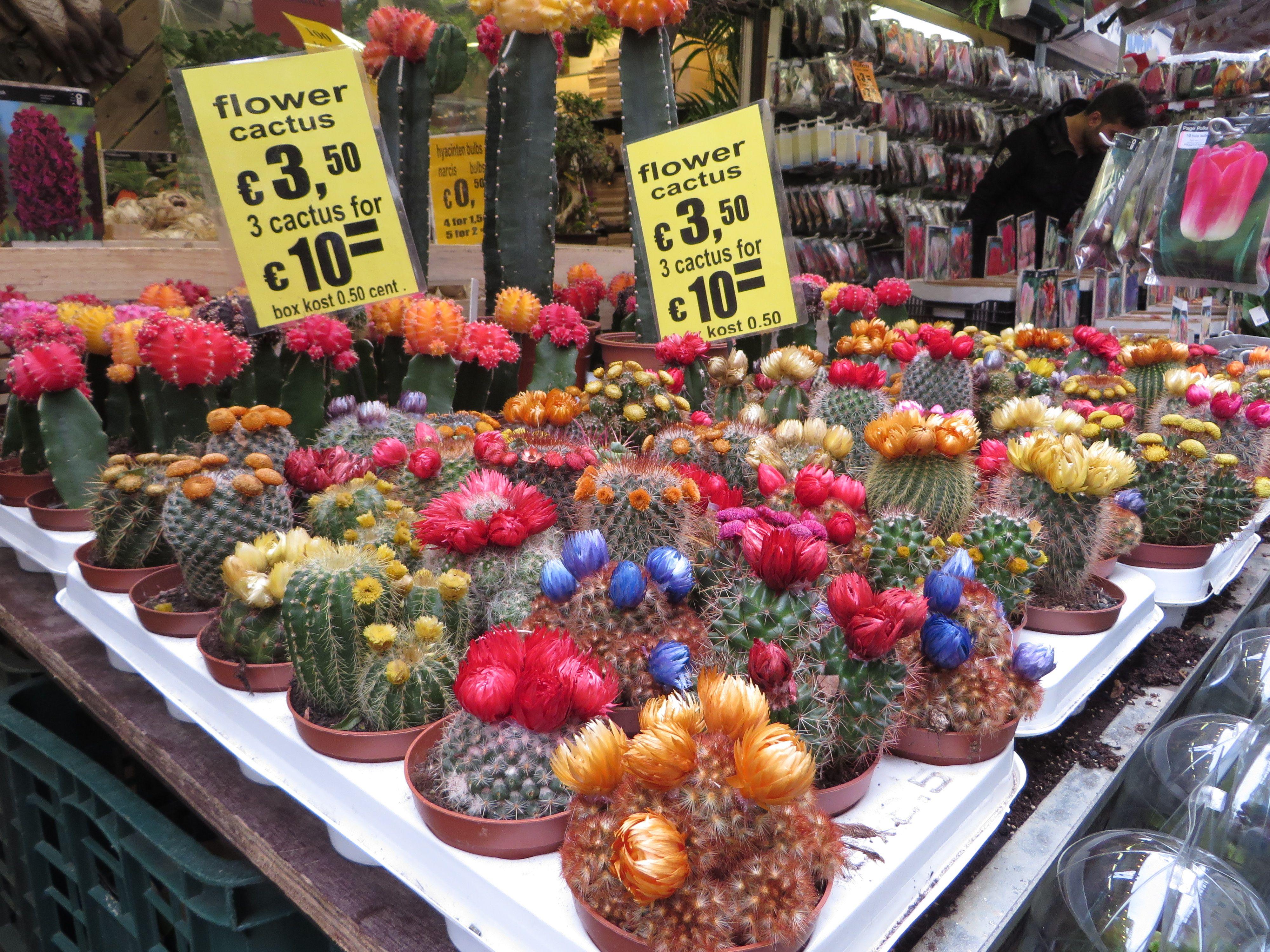 variedad y colorido de cactus en el mercado de flores, Amsterdam
