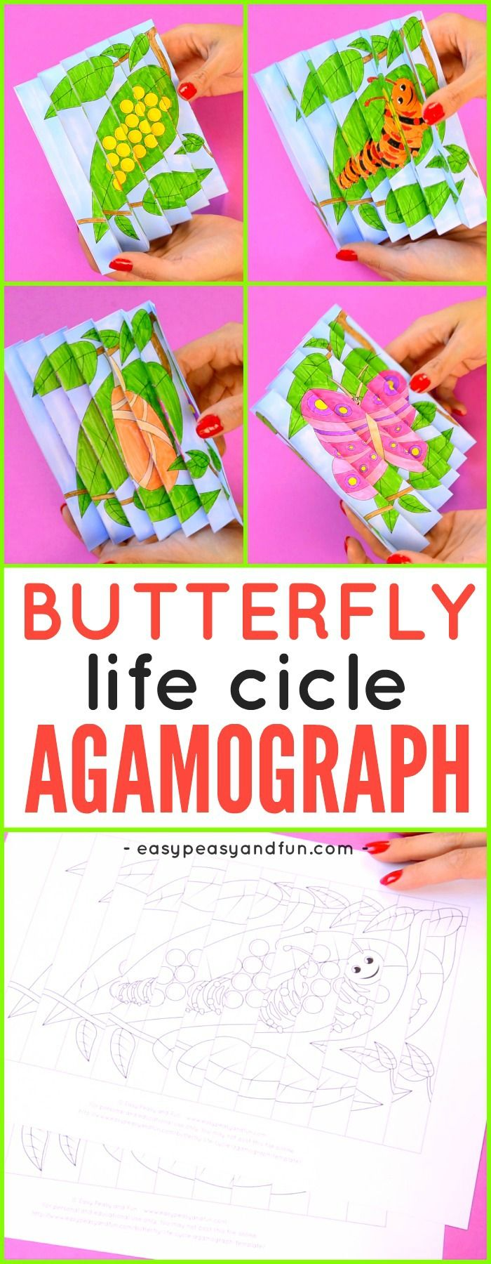 Printable Butterfly Life Cycle Agamograph Template Butterfly Life Cycle Agamograph Butterfly Printable
