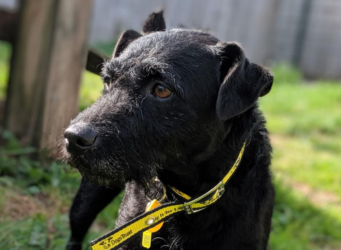 Looking at Kanga dogstrust rehomeadog Dogs trust, Dogs