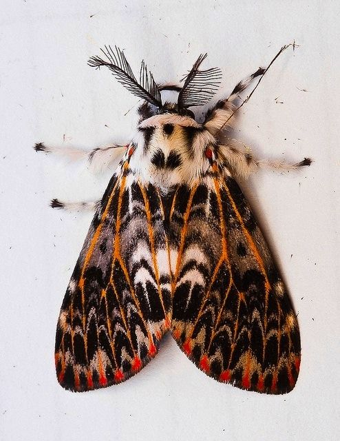 Insect Palette Insekten Schone Schmetterlinge Nachtfalter