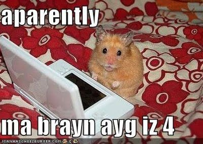 hamster brain age (With images) Funny hamsters, Hamster