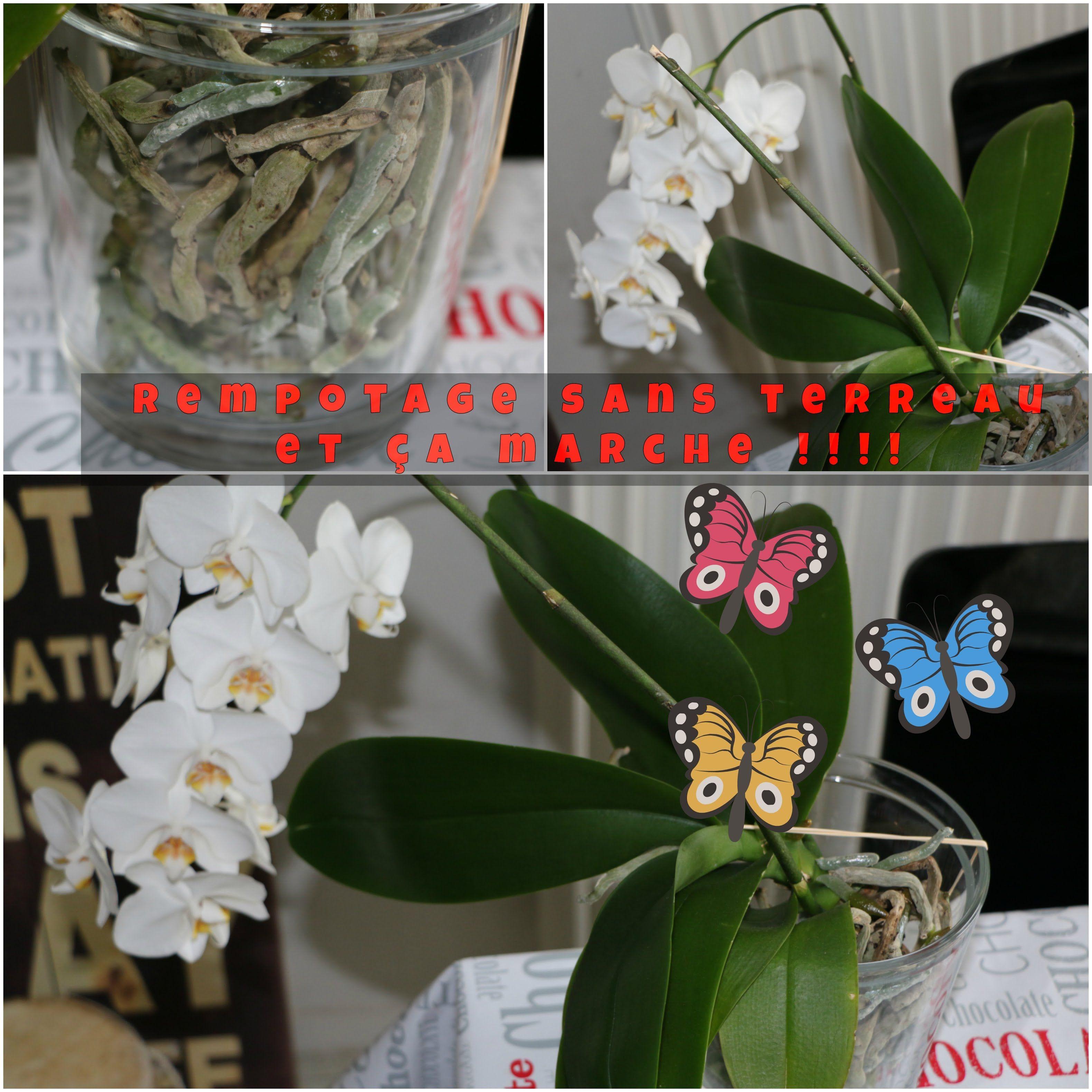 Mon Orchidee Rempotee Sans Terreau Et Ca Marche Orchidee