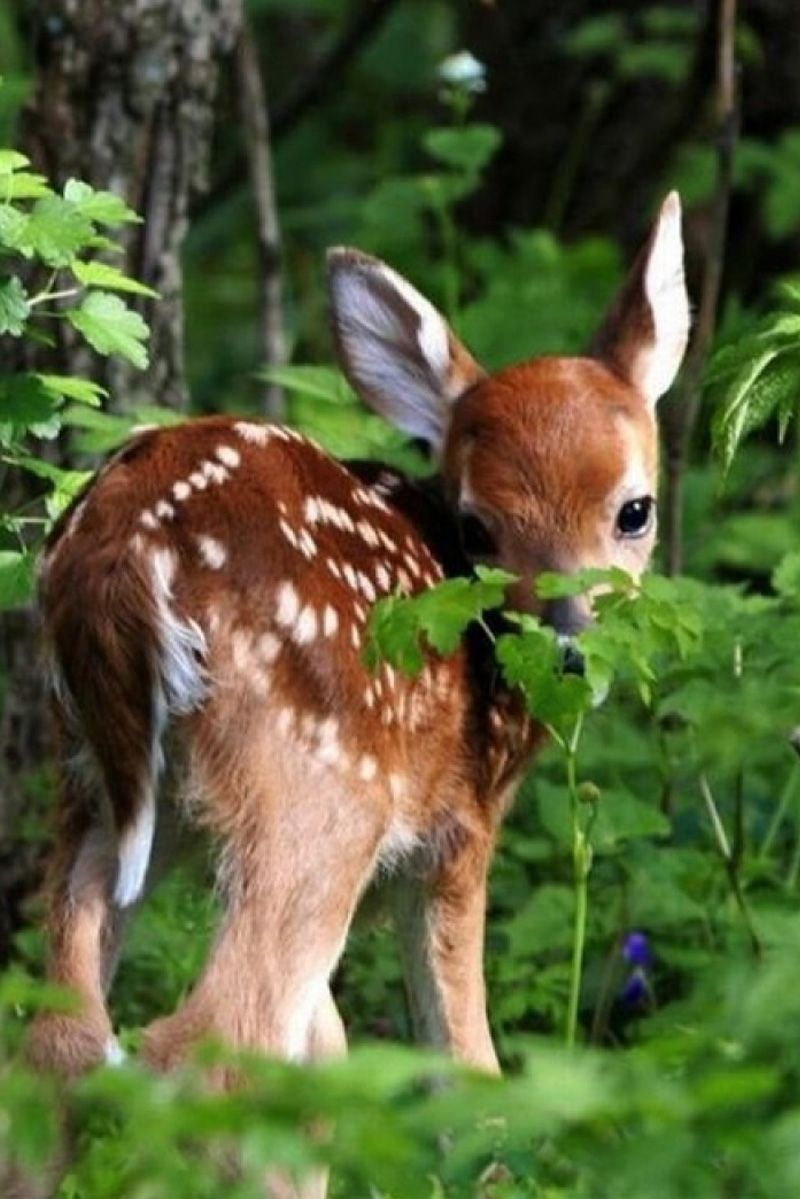 Small Animal Reptiles And Amphibian Habitats: Little Fawn In The Forest