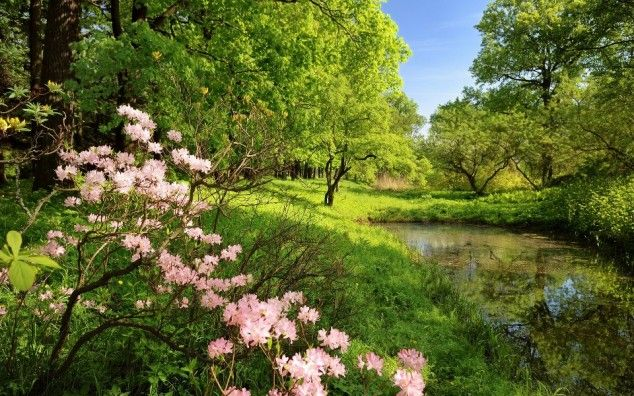 Wonderful Spring Landscapes | For the love of life pictures to ...