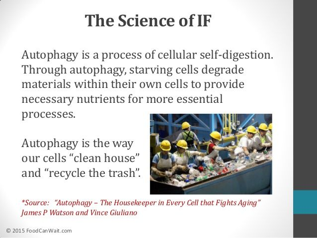 Image result for Intermittent Fasting Autophagy