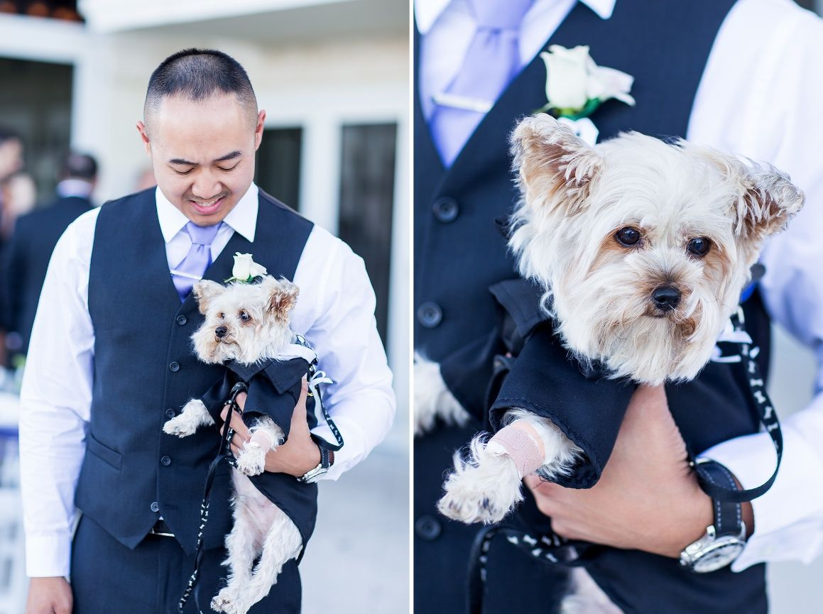Make your dog a part of the ceremony! Ring bearer for example.