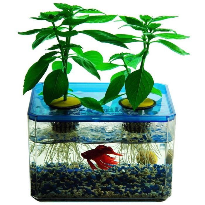 Jr ponics aquaponic fish garden great way for kids to for Fish garden system