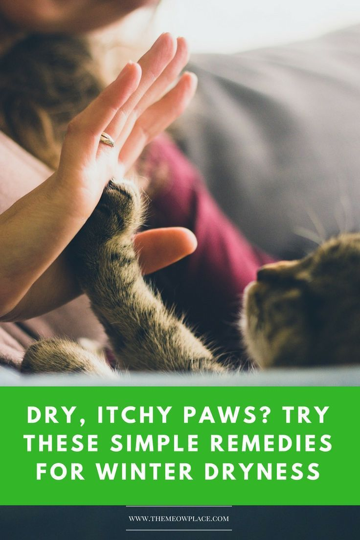Dry Itchy Paws Try These Simple Solutions Your Cat Will Love Living With Cats Cat Photography Mama Cat