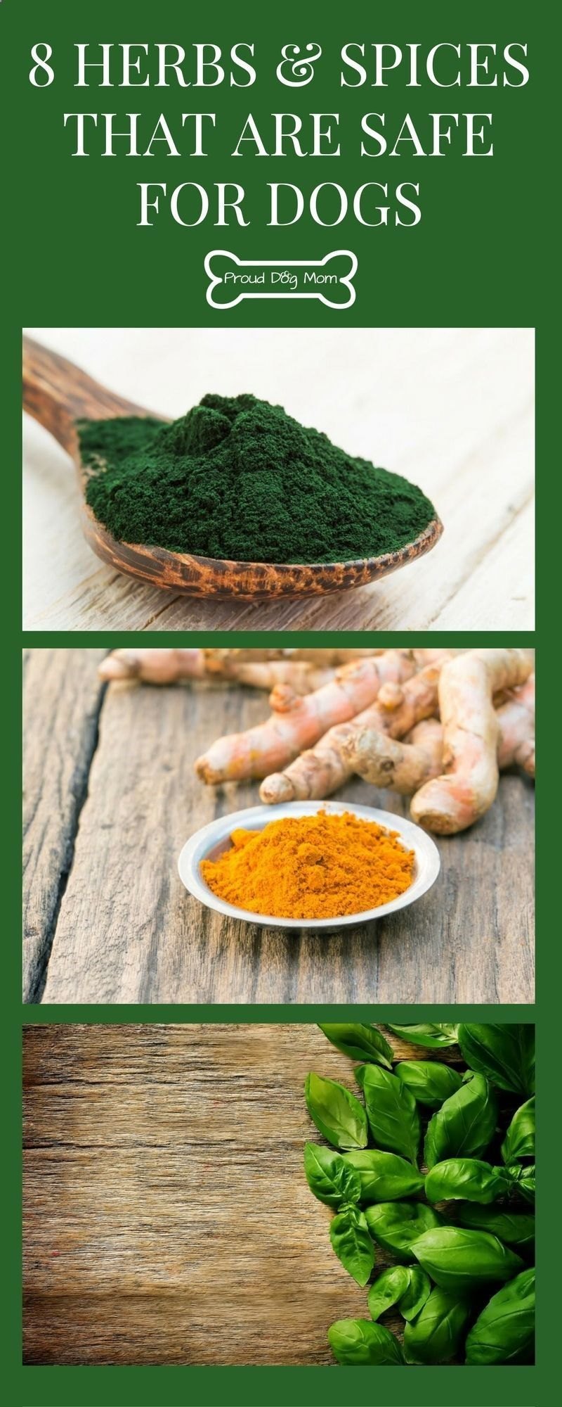 8 Herbs And Spices That Are Safe For Dogs Dog Health Diy Dog