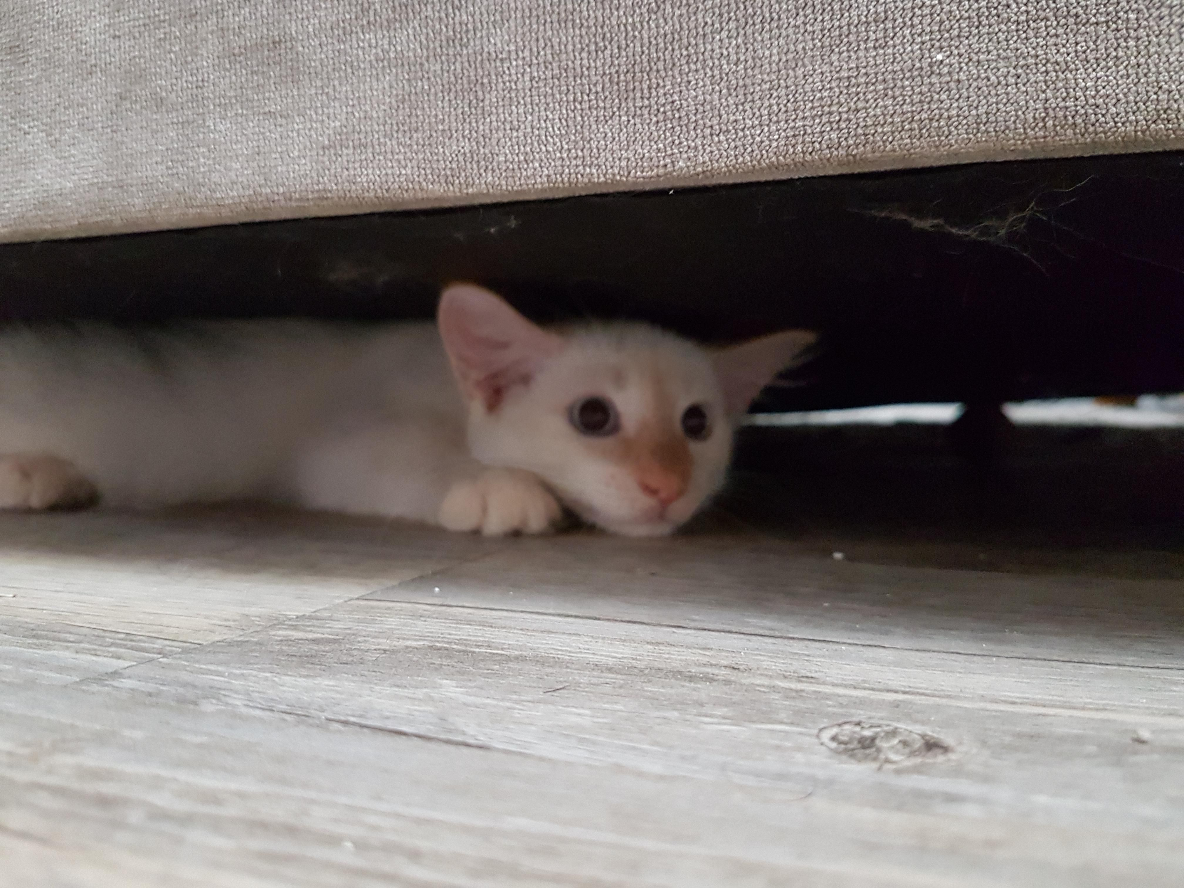 Kitten Found Out He Fits Under The Couch Kitten Animals Cats