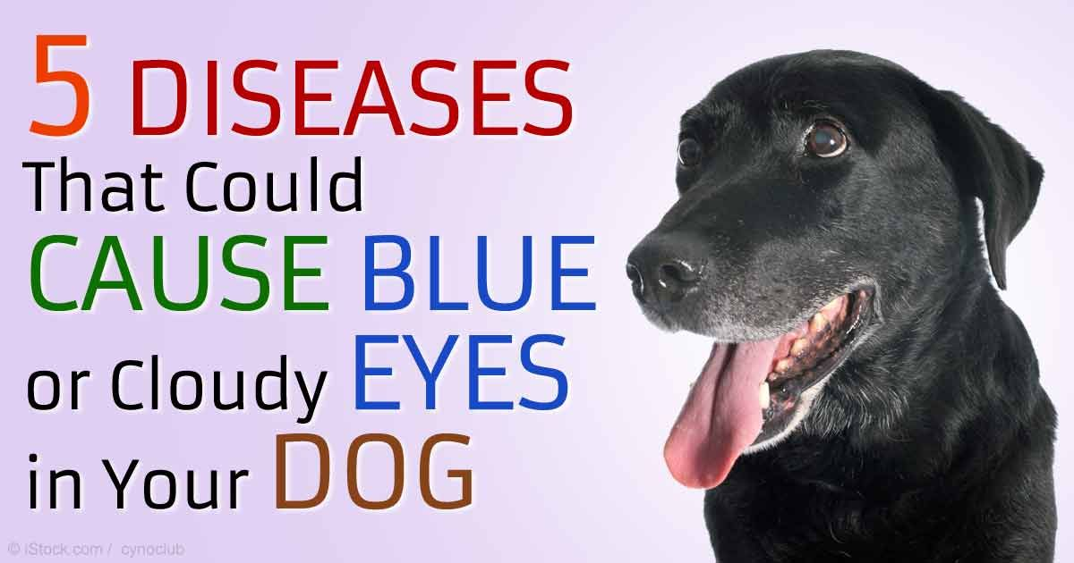 Canine cataract drops