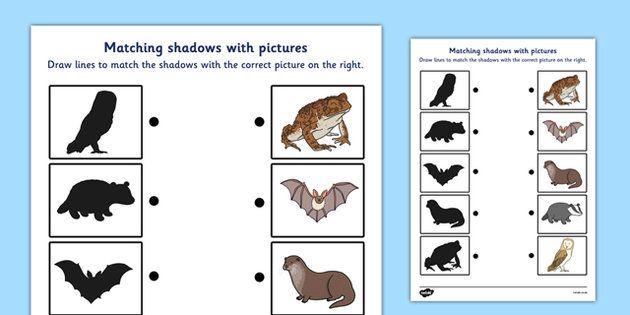 wild nocturnal animals shadow matching worksheet learn nocturnal animals matching. Black Bedroom Furniture Sets. Home Design Ideas