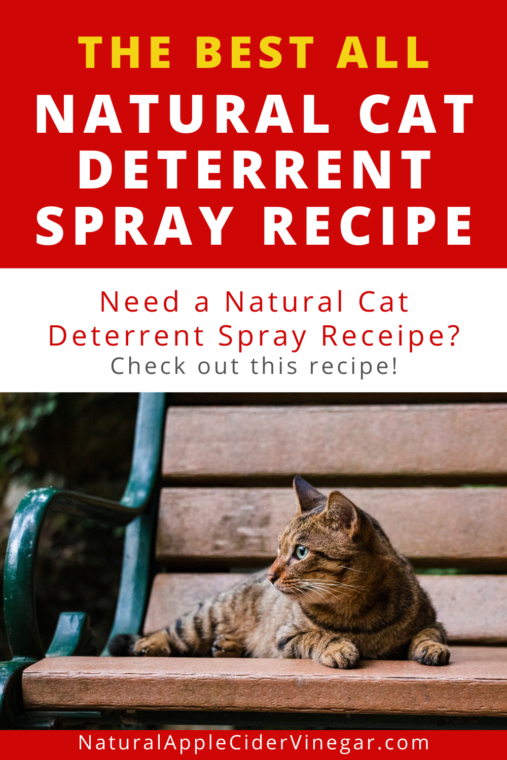 The Best All Natural Cat Deterrent Spray Recipe In 2020 With