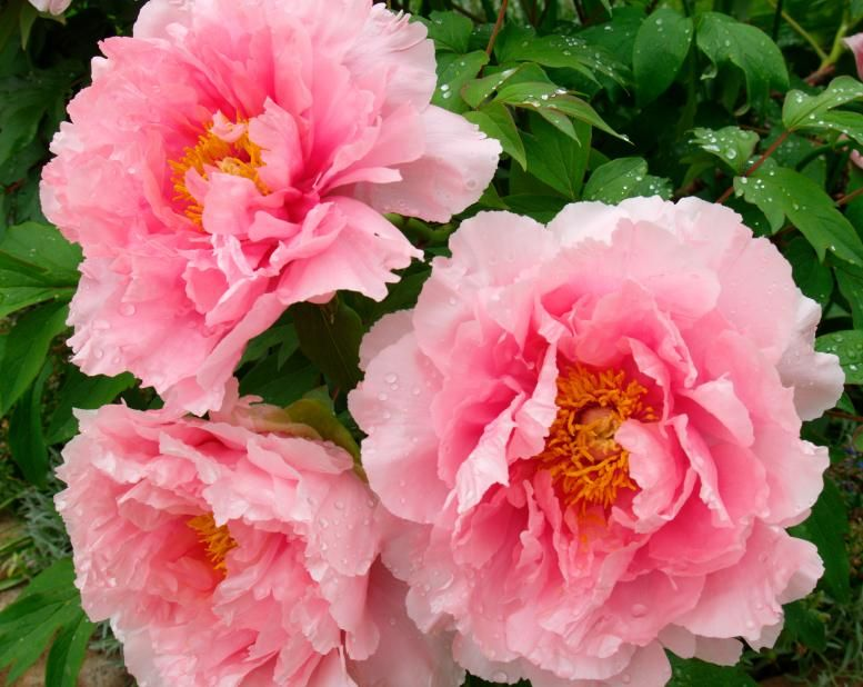 Diffe Types Of Flowers Are Used For Many Reasons In Almost All Cultures Diffeiate