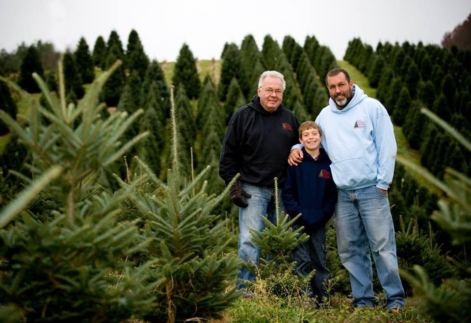 Boyd Mountain Tree Farm Waynesville North Carolina Cool Christmas Trees Tree Farms Christmas Tree Farm