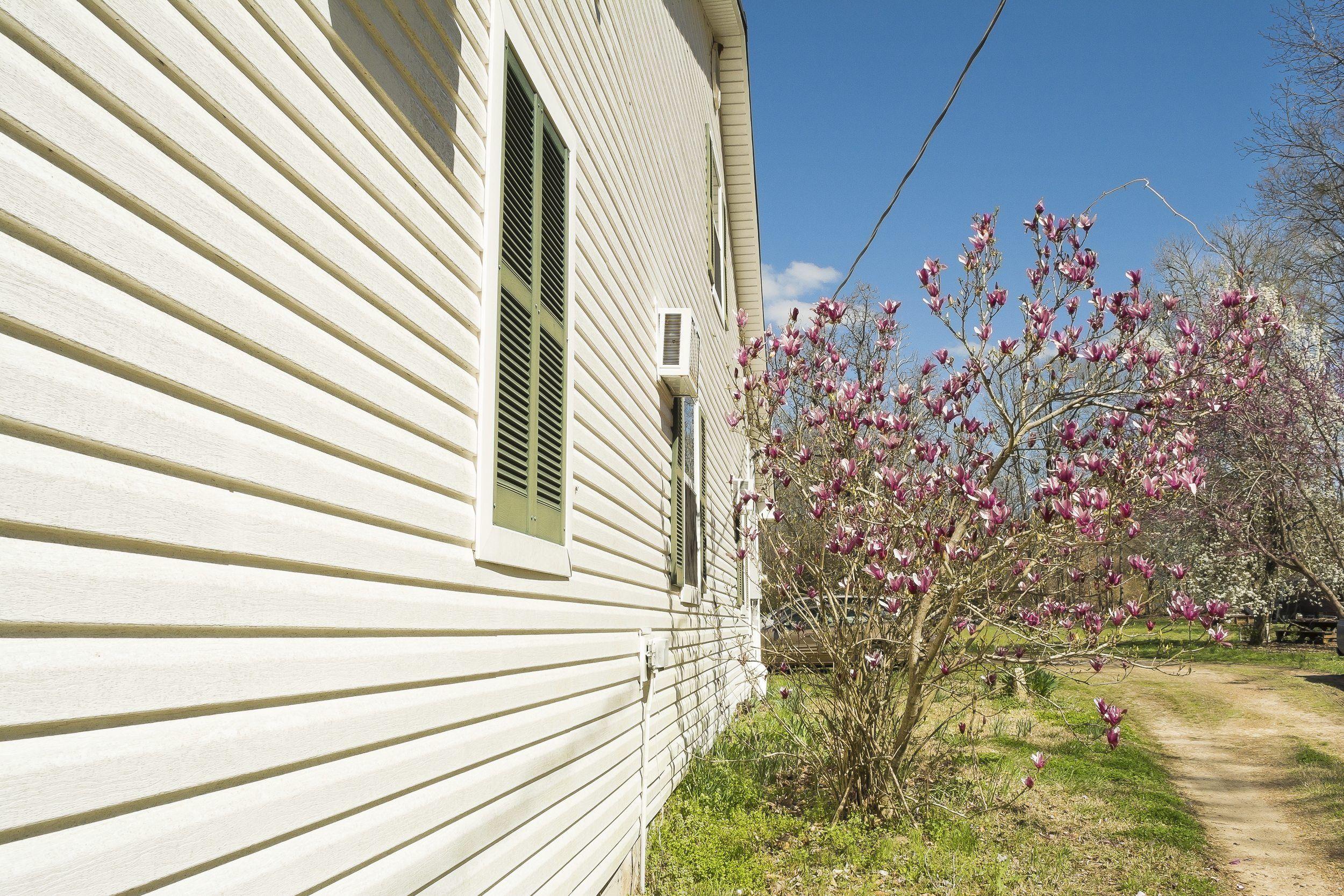 Magnolia Root System Are Magnolia Roots Invasive Magnolia Trees Landscaping Atlanta Tree Roots