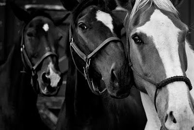 Horses give us the wings we lack.