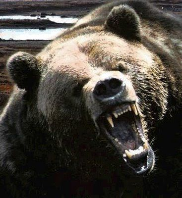 Pin By Mari Ahokoivu On Inspiration Bear Bear Pictures Grizzly Bear Bear Tattoos