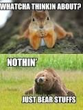 funny bears - Google Search