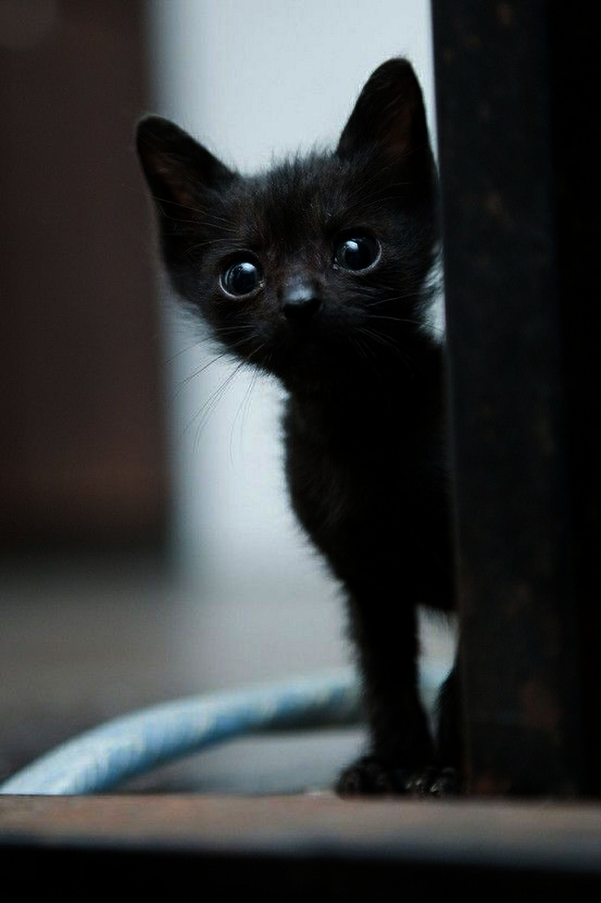 Ahhh Kittens For Sale In Ct Excellent Animaux Adorables Animaux Droles Chats Et Chatons
